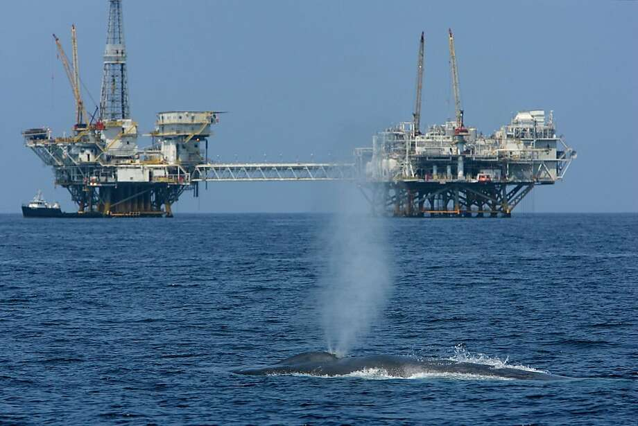 An endangered blue whale spouts 11 miles off the Long Beach Harbor in the Catalina Channel near offshore oil rigs. The Department of the Interior will hold a public hearing in San Francisco Thursday on opening new areas to oil and gas drilling. Photo: David McNew, Getty Images