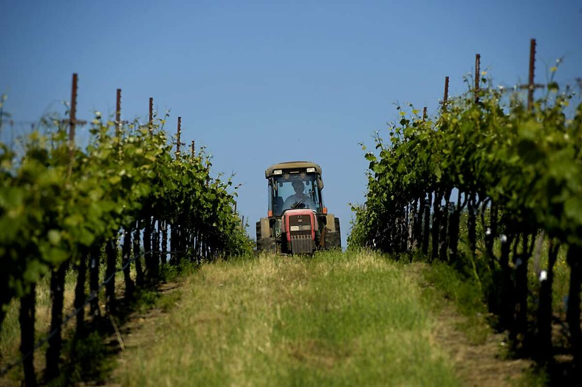 Grape grower and farmer Ron Mansfield drives a tractor through the vineyards at David Girard Vineyards in Placerville.