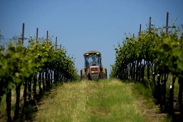 Grape grower and farmer Ron Mansfield drives a tractor through the vineyards at David Girard Vineyards in Placerville. Photo: Brian Baer, Special To The Chronicle