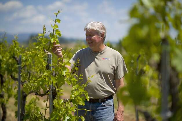 Grape grower and farmer Ron Mansfield looks over grapes in one of his vineyards in Placerville. Photo: Brian Baer, Special To The Chronicle