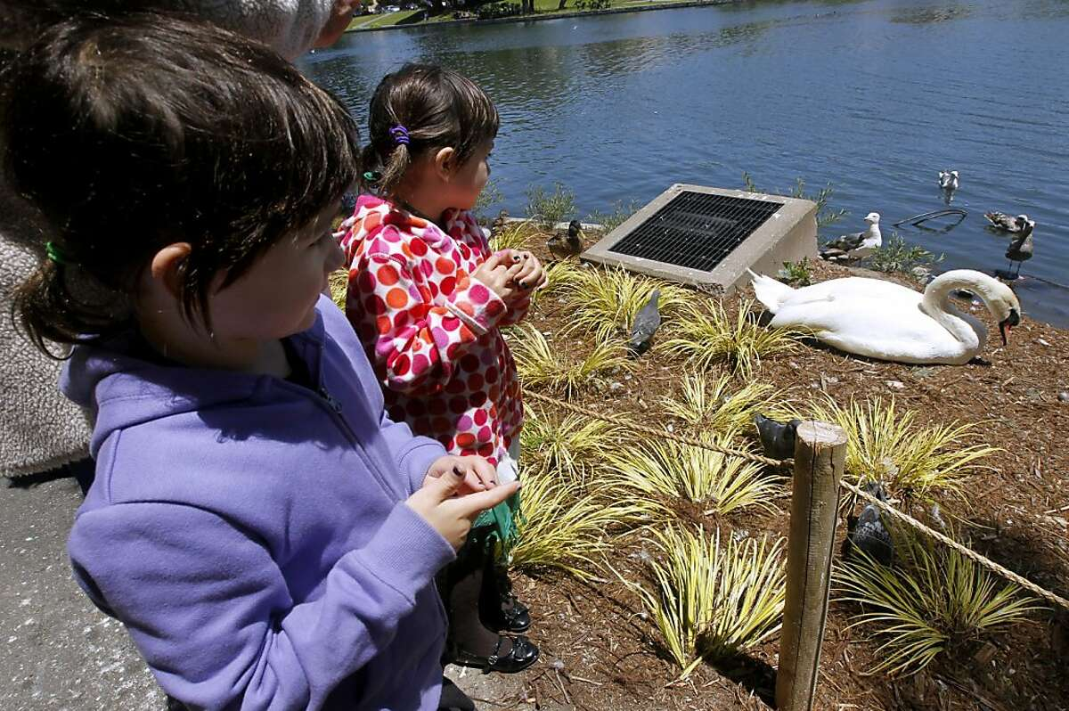 Nicola Geraldi (left) and her sister Gianna mourn the death of a baby swan at the Palace of Fine Arts in San Francisco, Calif. on Friday, June 17, 2011. The chick, who's father Blue Boy rests by the lagoon (far right), is missing and presumed dead, likely the victim of a hawk, in San Francisco, Calif. on Friday, June 17, 2011.