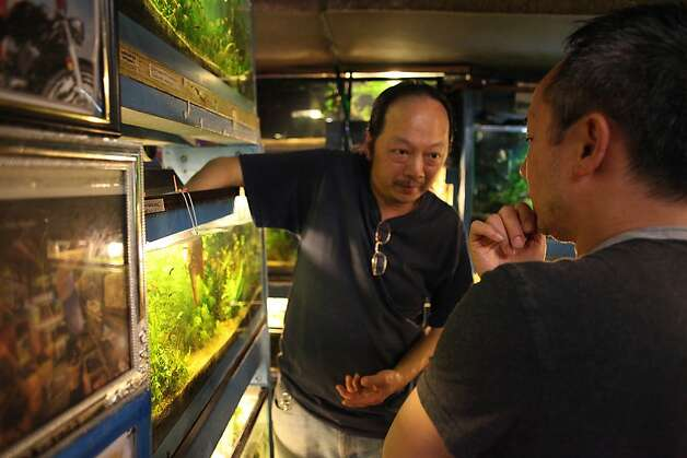 Justin Hau, co-owner Ocean Aquarium, answers questions for customer Arnold Eric Wong, of San Francisco, while Wong shops at the Ocean Aquarium  on Tuesday, June 14, 2011 in San Francisco, Calif. A new animal protection ordinance proposed by San Francisco's Animal Control and Welfare Commission would ban the sale of all animals including fish. Photo: Lea Suzuki, The Chronicle