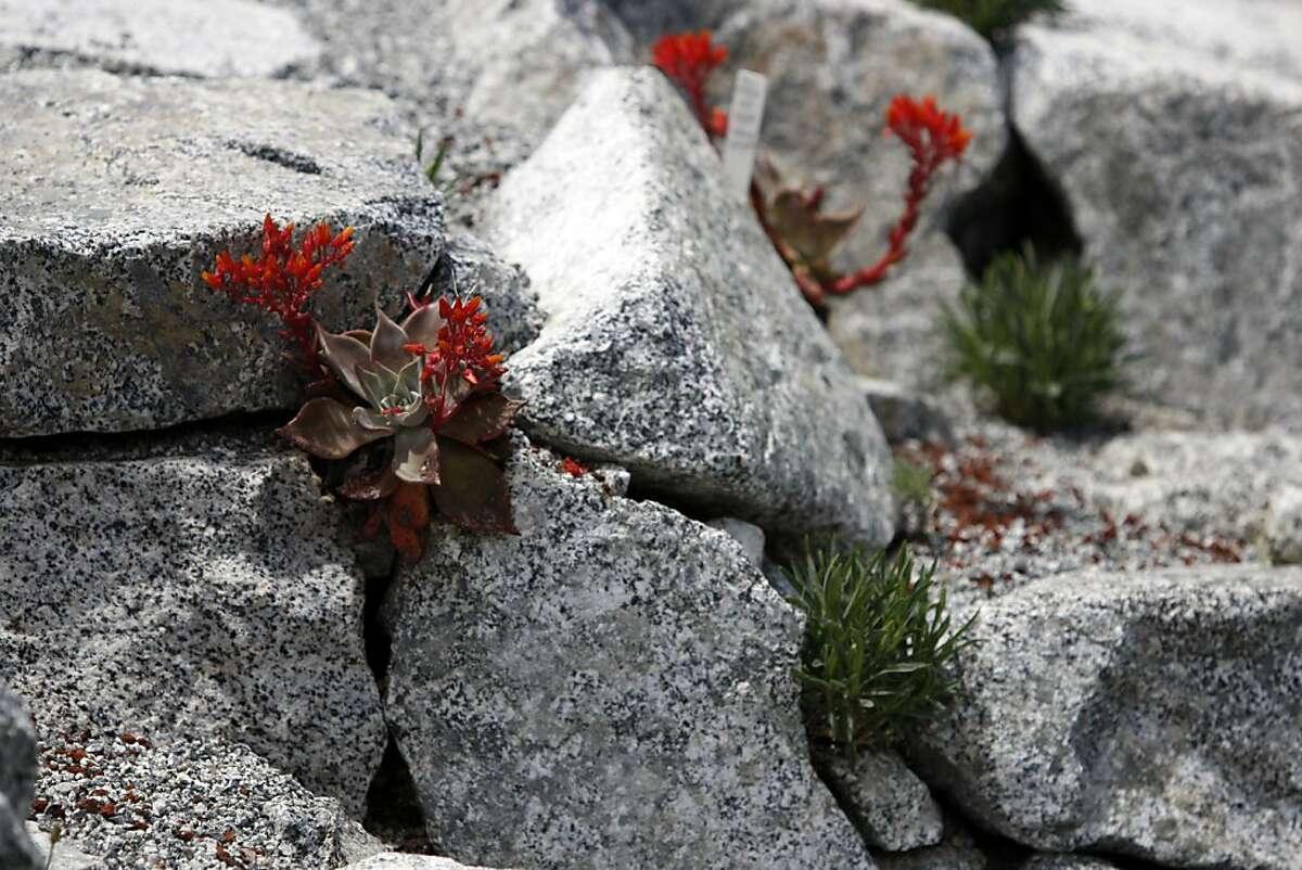 Succulents in the Sierran alpine rock garden at Tilden Botanic Garden in Berkeley, Calif., on Friday, May 27, 2011.