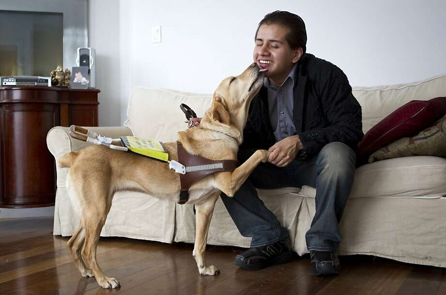 Belo Cipriani, the author of Blind: A Memoir, gets a kiss from his guide dog Madge at his apartment in San Francisco, Calif., on Friday, June 3, 2011.  Cipriani became blind after being beaten in a severe attack and recently wrote the memoir about the experience. Photo: Laura Morton, Special To The Chronicle