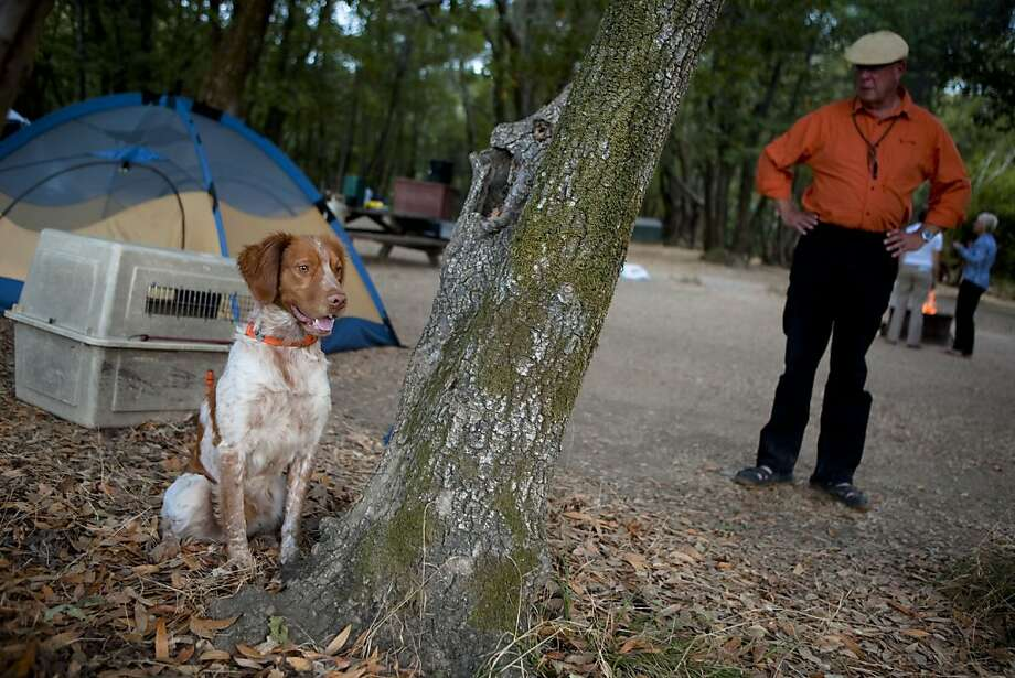 Tourist Allan Bratland, right, of Edmonton, Alberta looks at his two year-old Brittany hunting dog, Jack as it searchs for birds in a distance at the China Camp State Park campground in Marin, Calif. on Friday, Aug. 28, 2009. The number of Californians traveling over the upcoming labor day weekend, according to the American Automobile Association, is expected it to be significantly lower than previous years as many schools are already back in session and the current economy. Photo: Stephen Lam, The Chronicle