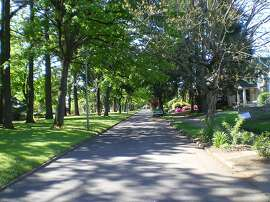 Trees line a street in the Portland neighborhood where Geoffrey Donovan studied the effect of trees on crime.