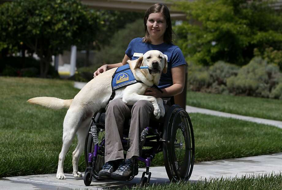 Apprentice instructor Courtney Wannarka trains Rutherford, a two-year-old labrador, to become a service dog at the Canine Companions for Independence campus in Santa Rosa, Calif. on Wednesday, May 11, 2011. Photo: Paul Chinn, The Chronicle