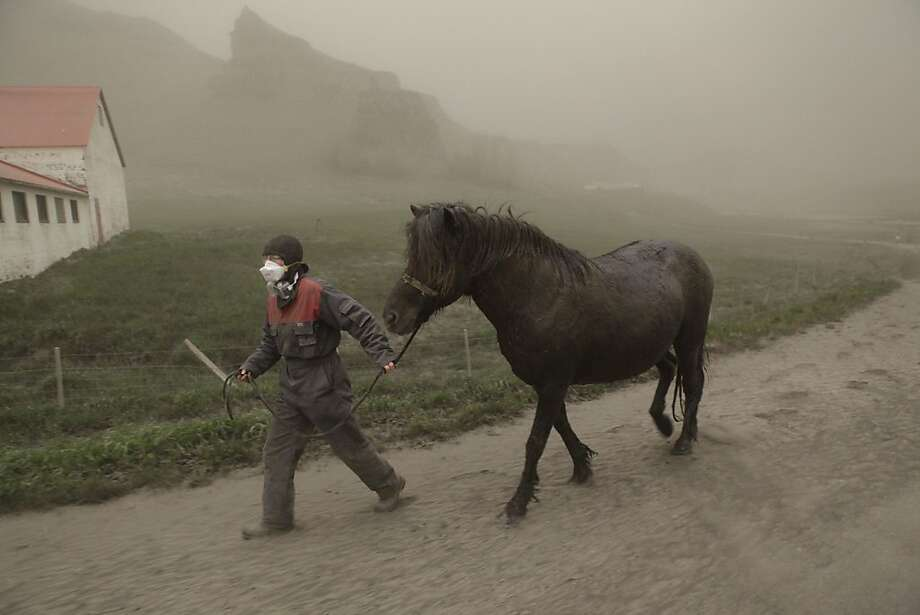 Anna Hardadottir, a farmer of Horgsland, leads a horse, through the ash pouring out of the erupting Grimsvoetn volcano on May 22, 2011. Ash deposits were sprinkled over the capital Reykjavik, some 400 kilometres (250 miles) to the west of the volcano, which has spewed an ash cloud about 20 kilometres into the sky. Less than 24 hours after the eruption began late Saturday, experts and authorities in Iceland said the volcanic activity had begun to decline. Photo: Vilhelm Gunnarsson, AFP/Getty Images