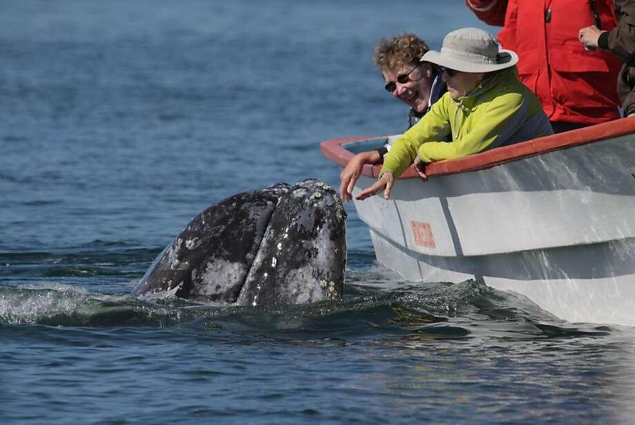 A mother whale with Joyce McKinney and Nancy Catena at San Ignacio Lagoon in Baja, Mexico. Photo: Courtesy Of Joyce McKinney