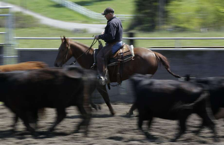 Jeff Sleeman, director of the Washington Cutting Horse Association, trains one of his horses for competition, Thursday, May 19, 2011, at his home in Roy, Wash.  All of Sleeman's horses are healthy, but he is taking precautions such as not allowing outsidehorses in his barns or pens and not taking his horses off his property after an outbreak the highly contagious disease called equine herpes virus (EHV-1). Photo: Ted S. Warren, AP