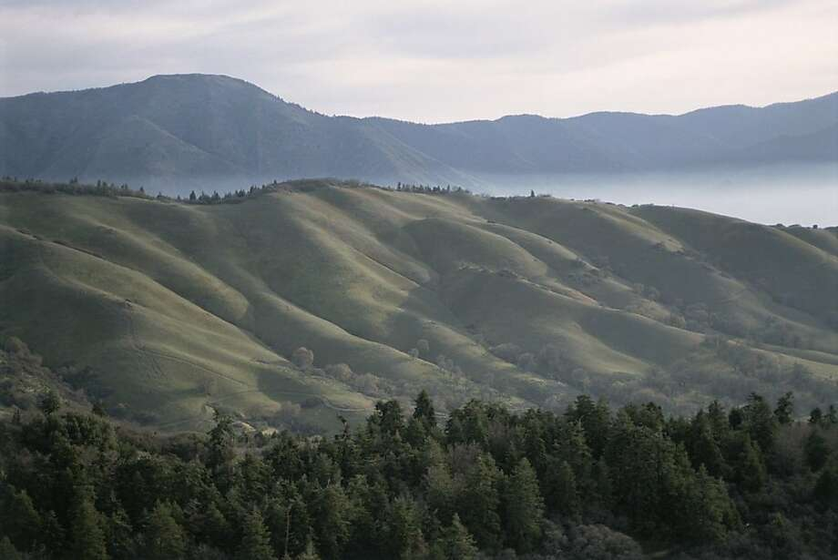 The 240,000 acres of conserved land on Tejon Ranch includes a variety of habitats. Photo: DMB Associates