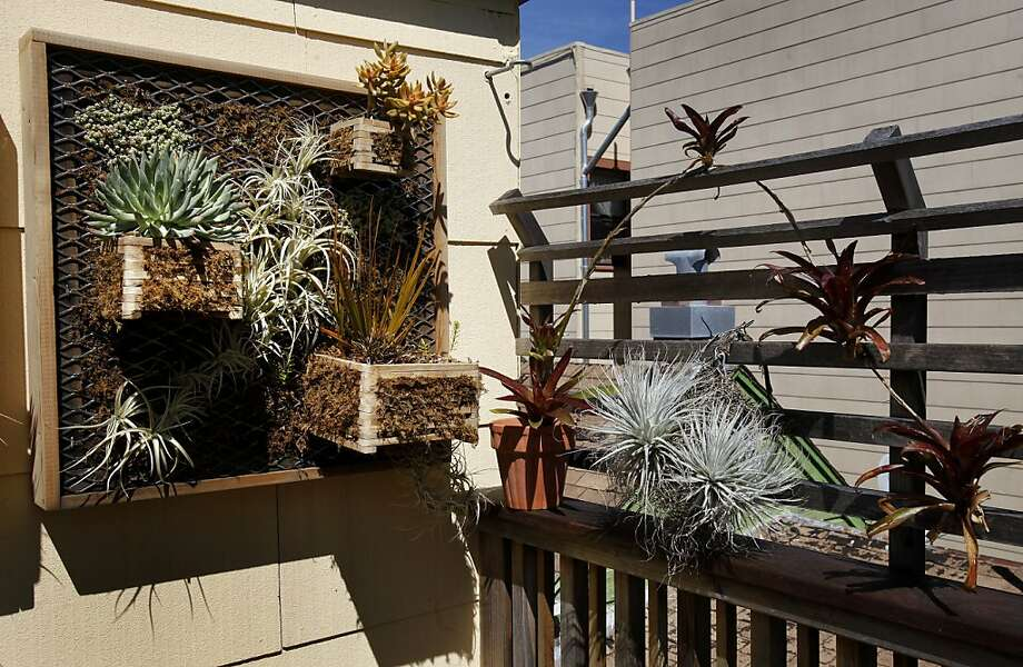 Sean Quigley lined his deck with curious plants and succulents. Sean Quigley has built a beautiful and functional deck at his Mission district home in San Francisco, Calif. Photo: Brant Ward, The Chronicle