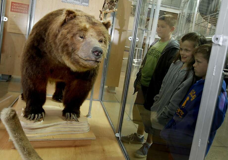 A group of young visitors get their first look at Monarch Thursday April 28, 2011. The last California grizzly bear, who is named Monarch, is stuffed and on display at the California Academy of Sciences in San Francisco, Calif. Monarch died in 1911, having lived out his life in San Francisco. He is the famous grizzly bear on the state flag. Photo: Brant Ward, The Chronicle