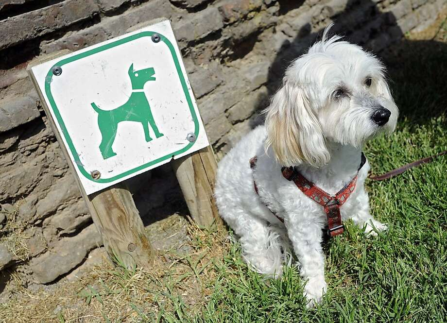 The 8.8 million dogs in France produce an estimated 194 million pounds of feces each year. Illustrates FRANCE DOGPOOP (category i), by A. Craig Copetas (c) 2011, Bloomberg News. Moved Wednesday, April 20, 2011. (MUST CREDIT: Bloomberg News photo by Fabrice Dimier.) Photo: Dimier, BLOOMBERG