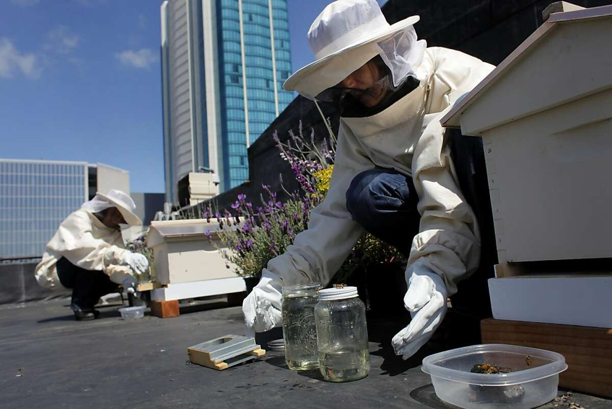 San Francisco Chronicle Home and Garden Editor Deb Wandell, left checks one of the new beehives, as reporter Meredith May tops off the hives sugar water on the rooftop garden, Thursday April 21, 2011, in San Francisco, Calif.