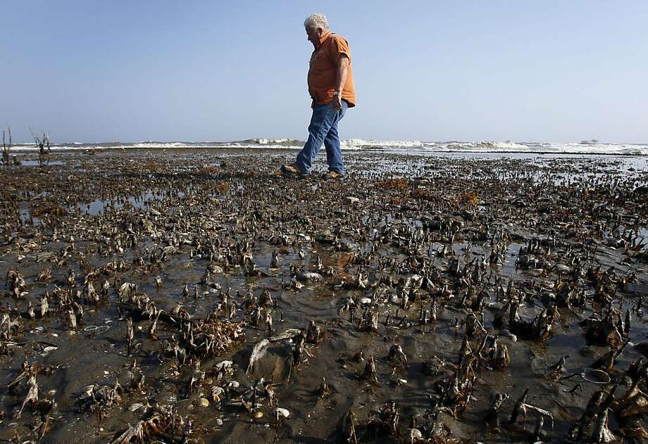 Wisner Properties Field Inspector Forrest Travirca walks in an area of dead marsh grass that was impacted by oil from the BP PLC oil spill on Fourchon Beach in Port Fourchon, La., Wednesday, April 20, 2011.   Even as somber remembrances marked the first anniversary of the worst offshore oil spill in American history, there were reminders that lengthy legal battles lay ahead. BP filed a lawsuit alleging negligence by the maker of the device that failed to stop the spill, while the manufacturer of the blowout preventer and rig owner filed their own claims. Photo: Patrick Semansky, AP