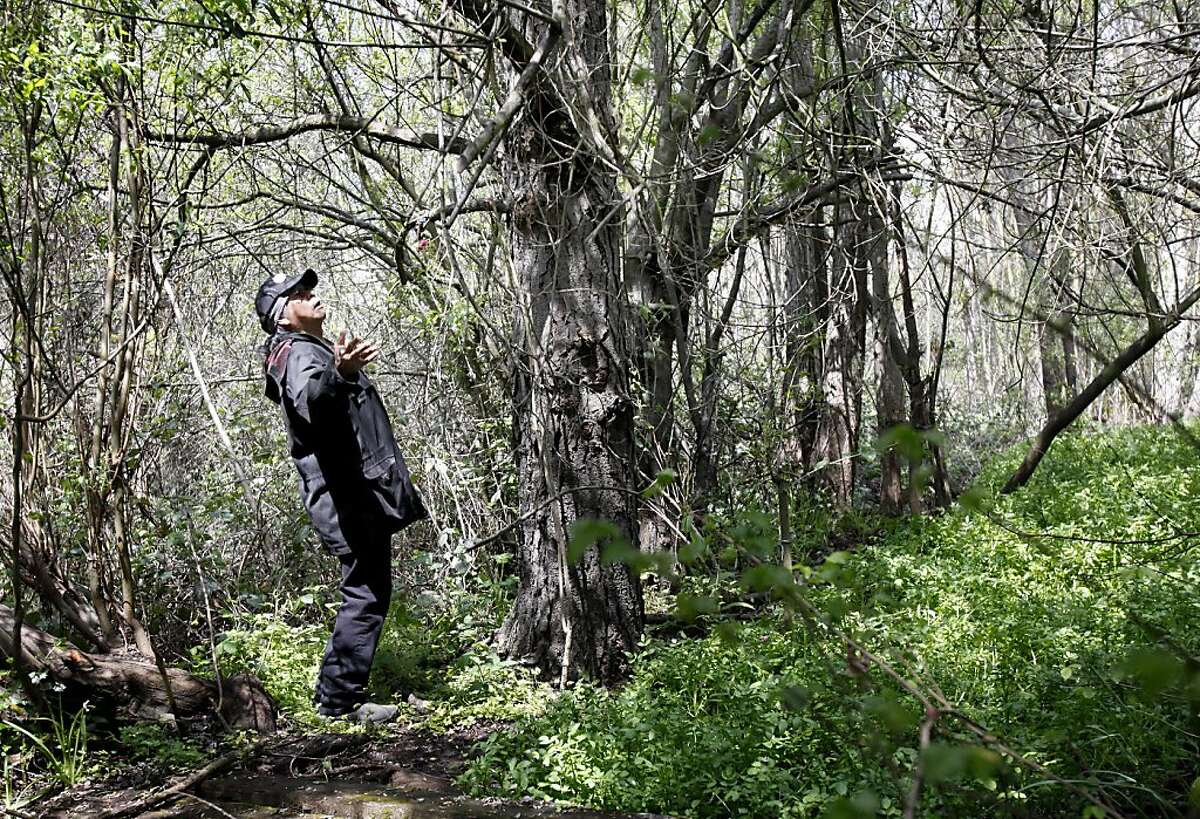 Wounded Knee (left) stops in an area of Glen Cove Park after he sees wildlife. The Ohlone tribe and other Native American groups are protesting a Vallejo, Calif. park department plan to develop Glen Cove park, where they say an old burial ground and shell mound contain the remains of their ancestors Wednesday April 13, 2011.