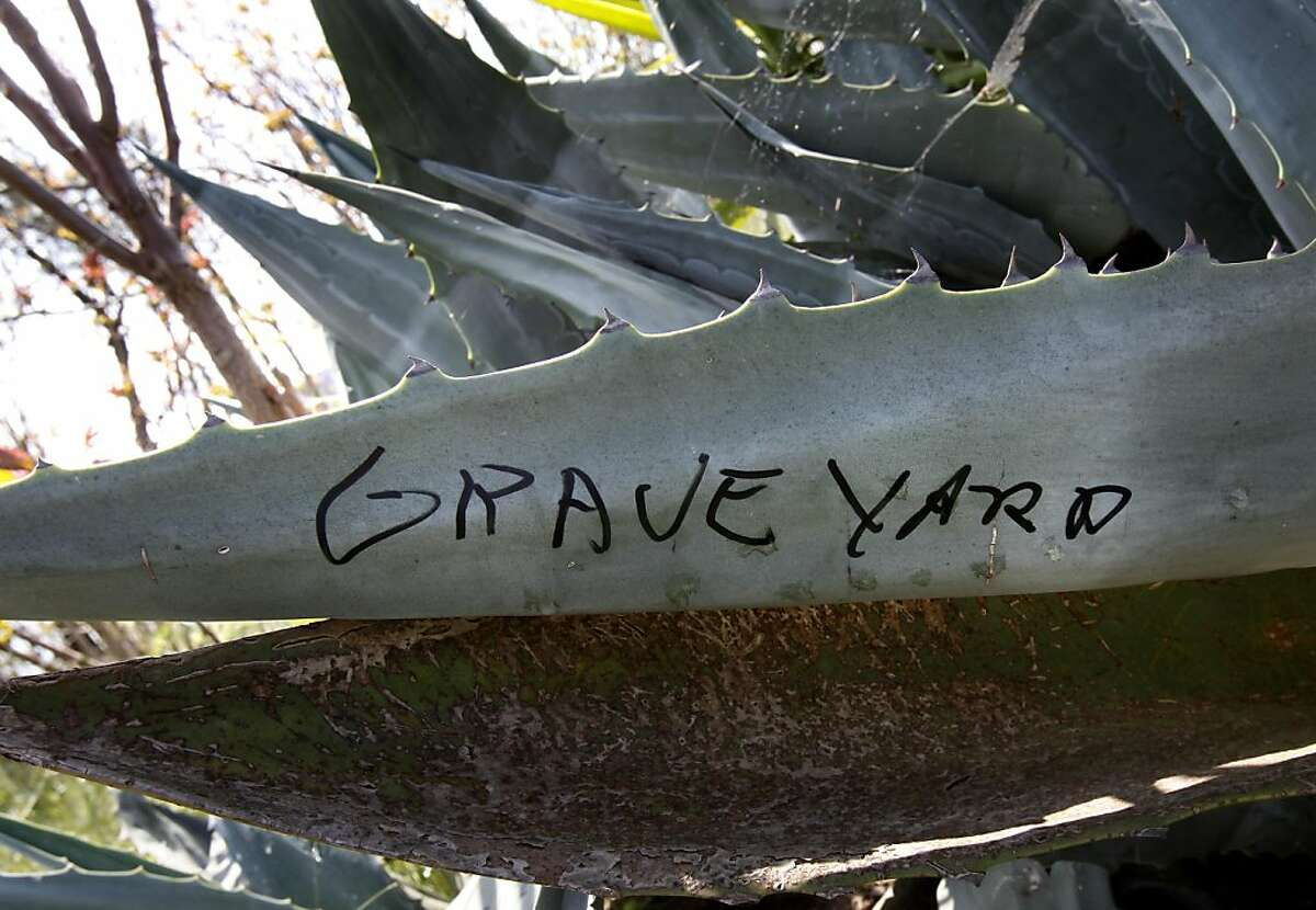 On a large cactus plant, someone had written