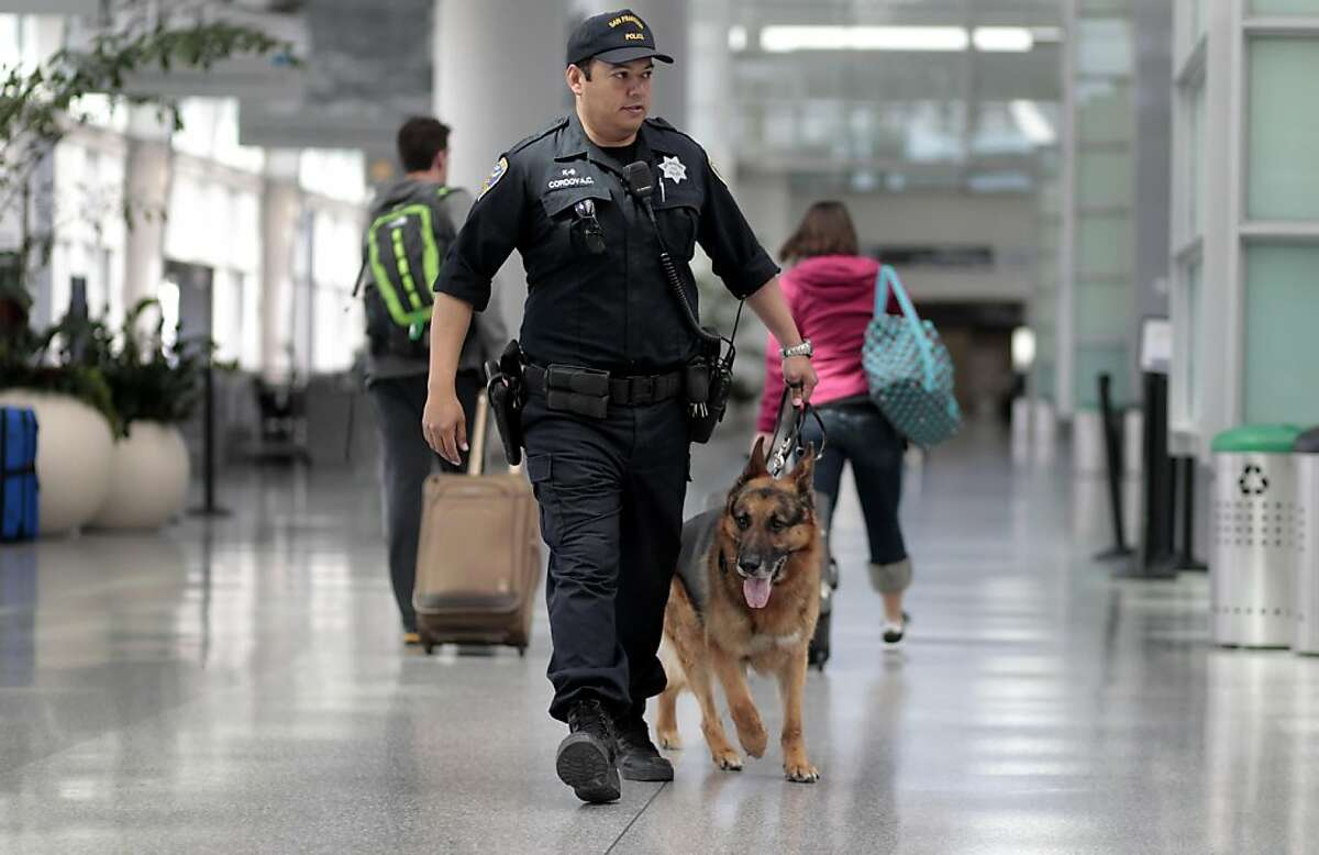 San Francisco Police Officer Carlos Cordova, with the K-9 division walks the bomb sniffing dog, Fax, 7 years old, through the International Terminal at San Francisco International Airport, Tuesday April 12, 2011, in San Francisco, Calif.