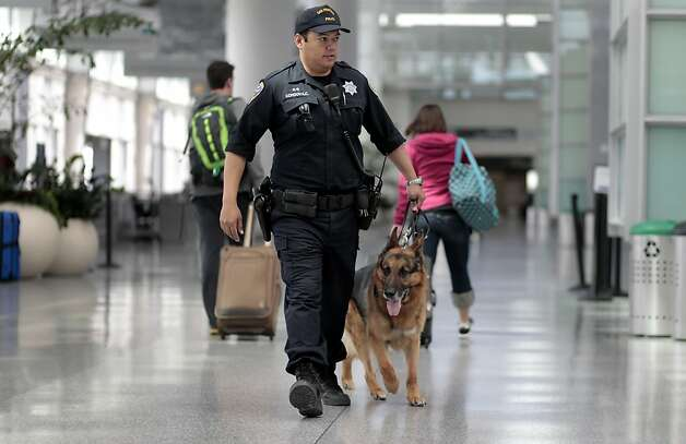 San Francisco Police Officer Carlos Cordova, with the K-9 division walks the bomb sniffing dog,  Fax, 7 years old, through the International Terminal at San Francisco International Airport, Tuesday April 12, 2011, in San Francisco, Calif. Photo: Lacy Atkins, The Chronicle