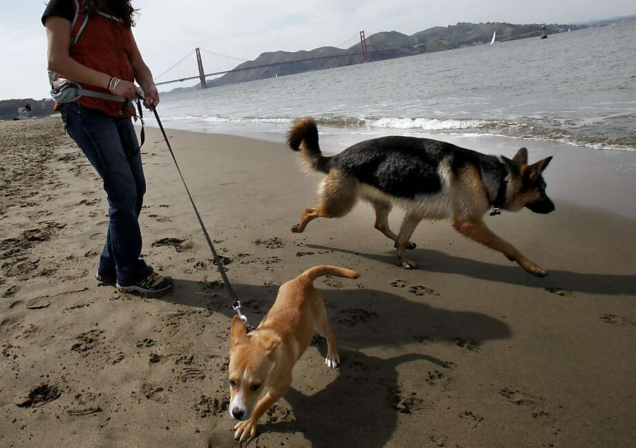 There are a lot of dogs in San Francisco, particularly at East Beach which has a lovely view of the Golden Gate Bridge Thursday April 15, 2010. Chronicle writer Carl Nolte talks about misconceptions about some of the Bay Area's notable icons. Photo: Brant Ward, The Chronicle