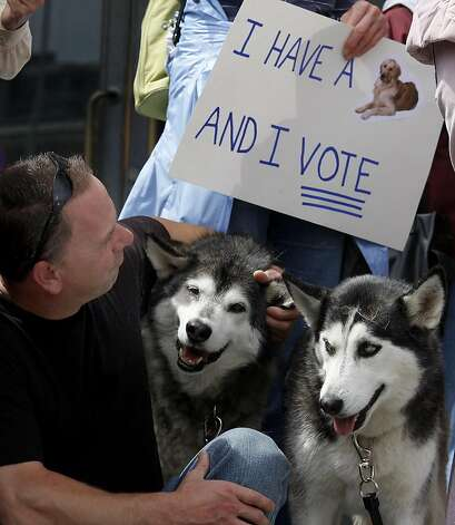John Chirico and his huskies sat in the crowd during the demonstration. A large gathering of dog owners on the steps of San Francisco City Hall Monday April 11, 2011 preceded a meeting of the Board of Supervisors. The dog owners are upset with the Golden Gate National Recreation Area plan to cut or ban dogs in specific areas of the park. Photo: Brant Ward, The Chronicle