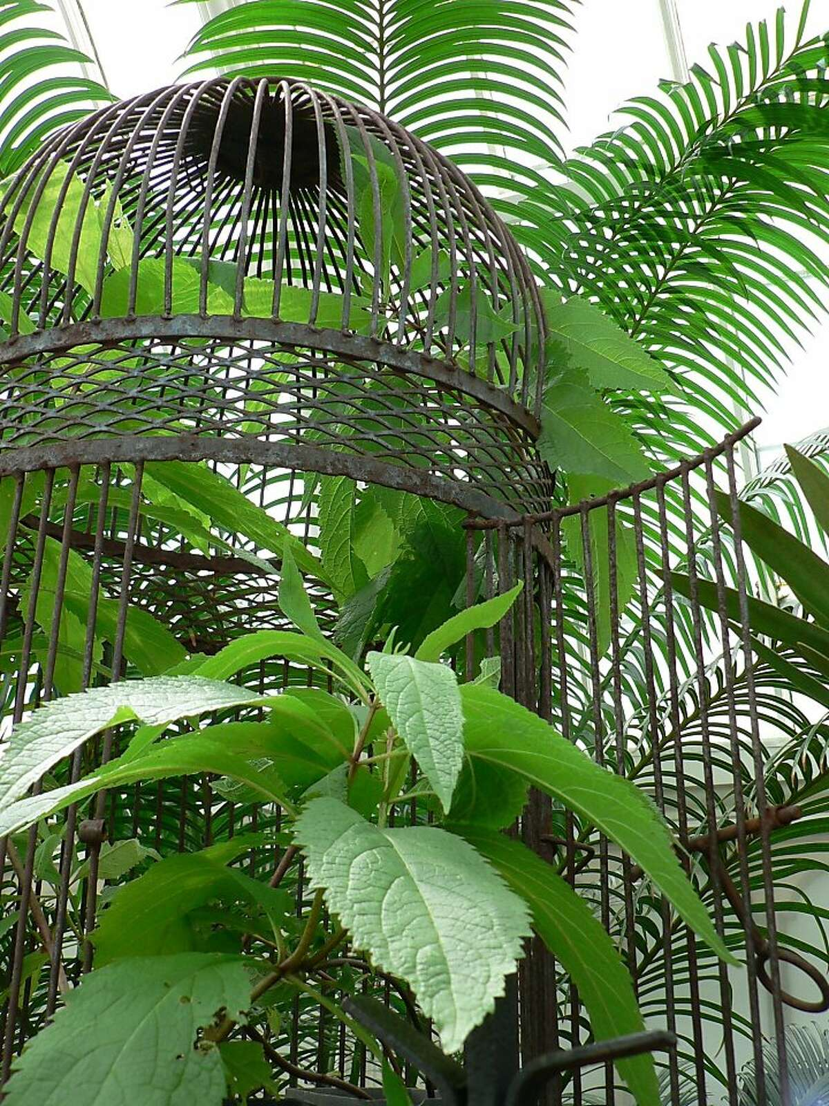 White snakeroot in the cage.