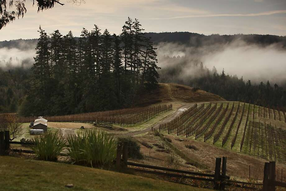 Peay Vineyards in Annapolis, Calif., on December 17, 2009. Photo: Craig Lee, Special To The Chronicle