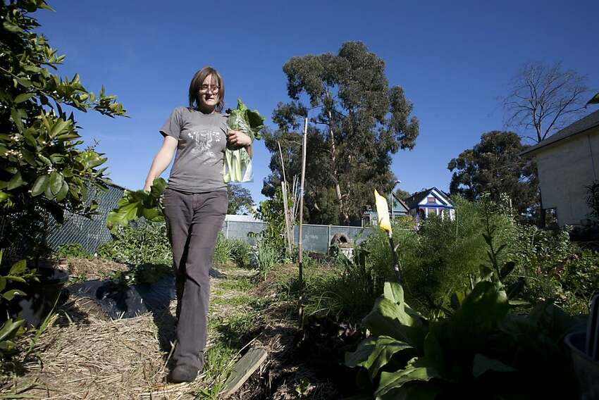 Author, farmer and Ghost Town Farm blogger, Novella Carpenter picks Italian Swiss Chard and Dino Kale in her backyard farm in Oakland, Calif. on Wednesday, March 30, 2011. Carpenter, cancelled her usual Wednesday Farmstand after Oakland City officials closed her down Tuesday stating that she needed a Conditional Use Permit for growing vegetables for $2500 in addition to the $2500 fine for noncompliance. Kat Wade / Special to the Chronicle
