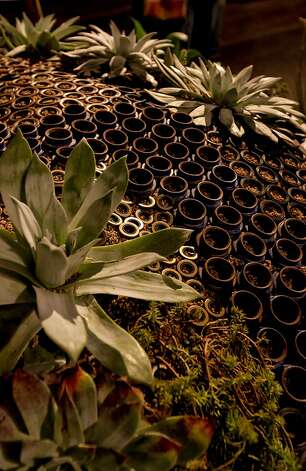 "Aqueduct pipe and automobile engine gaskets are turned into planters by Jeffery Gordon Smith Landscape Architecture, the creator of the garden ""PI R Squared"", at the San Francisco Flower and Garden show at the Event Center on Saturday Mar. 26, 2011, in San  Mateo, Ca. Photo: Michael Macor, The Chronicle"
