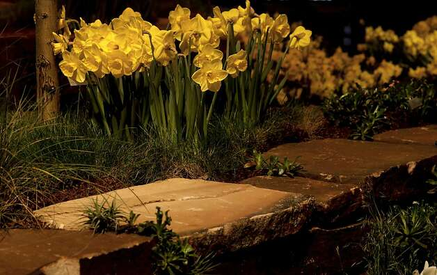 "Daffodils scattered about the stone planters at  ""A Garden For Life"" from The Garden Route Company. The San Francisco Flower and Garden show at the Event Center on Saturday Mar. 26, 2011, in San  Mateo, Ca. Photo: Michael Macor, The Chronicle"