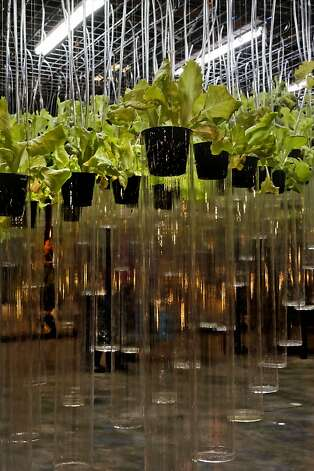 "The ""Plant Lab"" a creation by the University of California at Berkeley, is a volumetric field of edible plants using hydroponics, displayed at the San Francisco Flower and Garden show at the Event Center on Saturday Mar. 26, 2011, in San  Mateo, Ca. Photo: Michael Macor, The Chronicle"