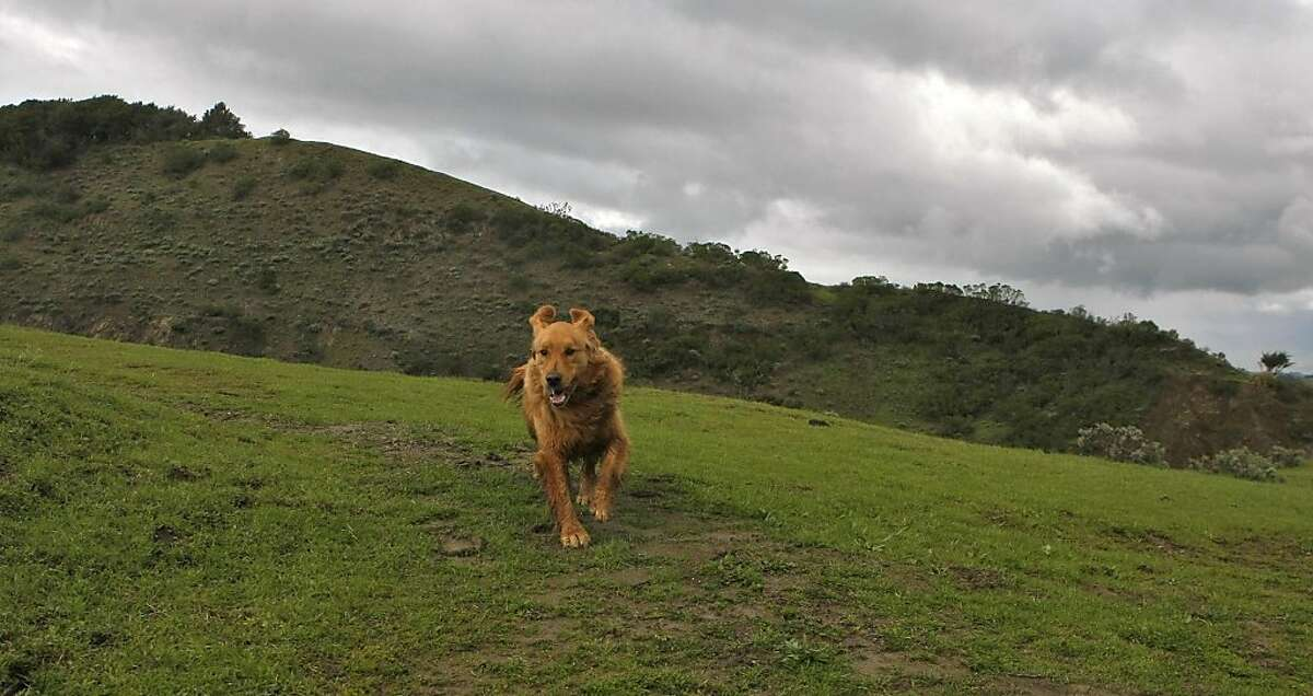 Some trail among the Sibley Volcanic Regional Preserve are dog friendly, Sunday, March 20, 2011 in Oakland, Calif.