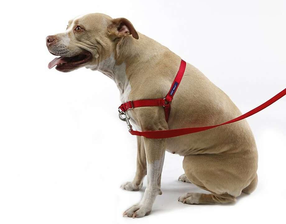 Good and bad dog collars - SFGate