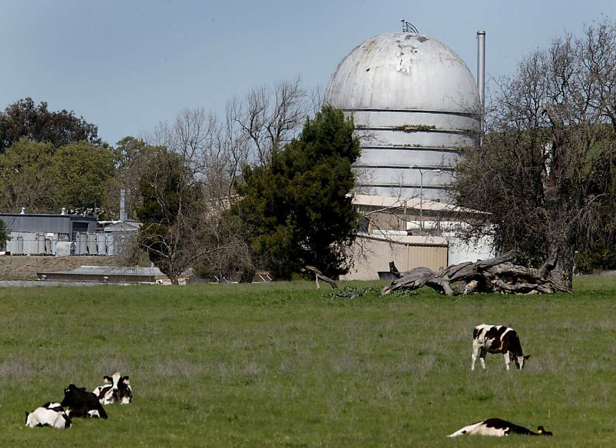 Cows graze in a field next to one of the old nuclear reactors (right). An older nuclear reactor site, operated by General Electric, sits off highway 84 in the Sunol, Calif. area.