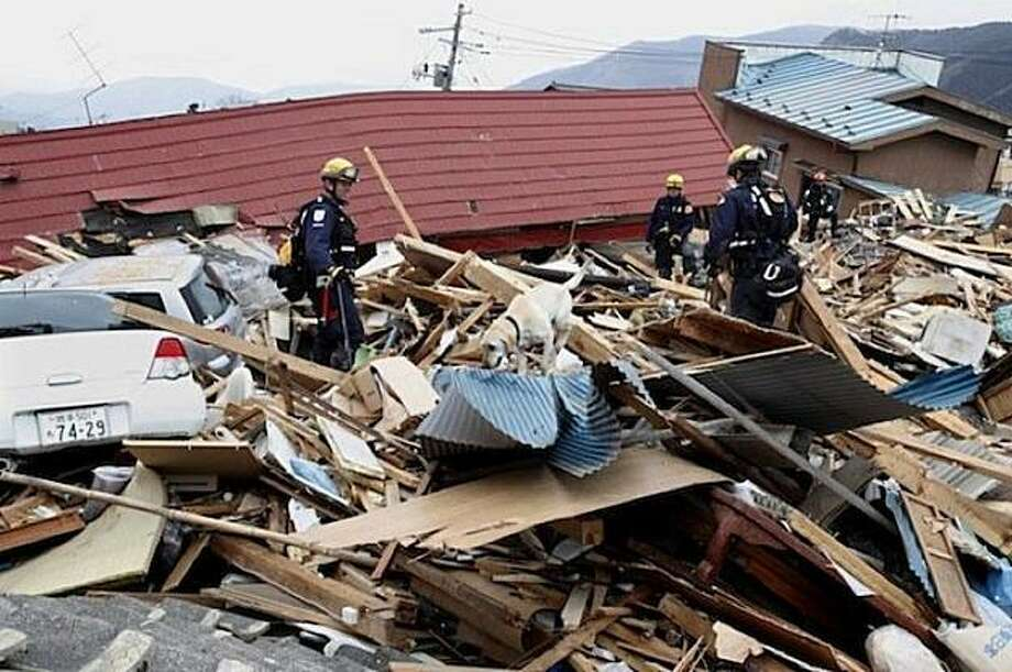 Riley, a disaster search dog trained by the National Disaster Search Dog Foundation in Ojai, searching for survivors in the wreckage left by the massive earthquake and tsunami in Ofunato, Japan. Photo: Courtesy Of NDSDF