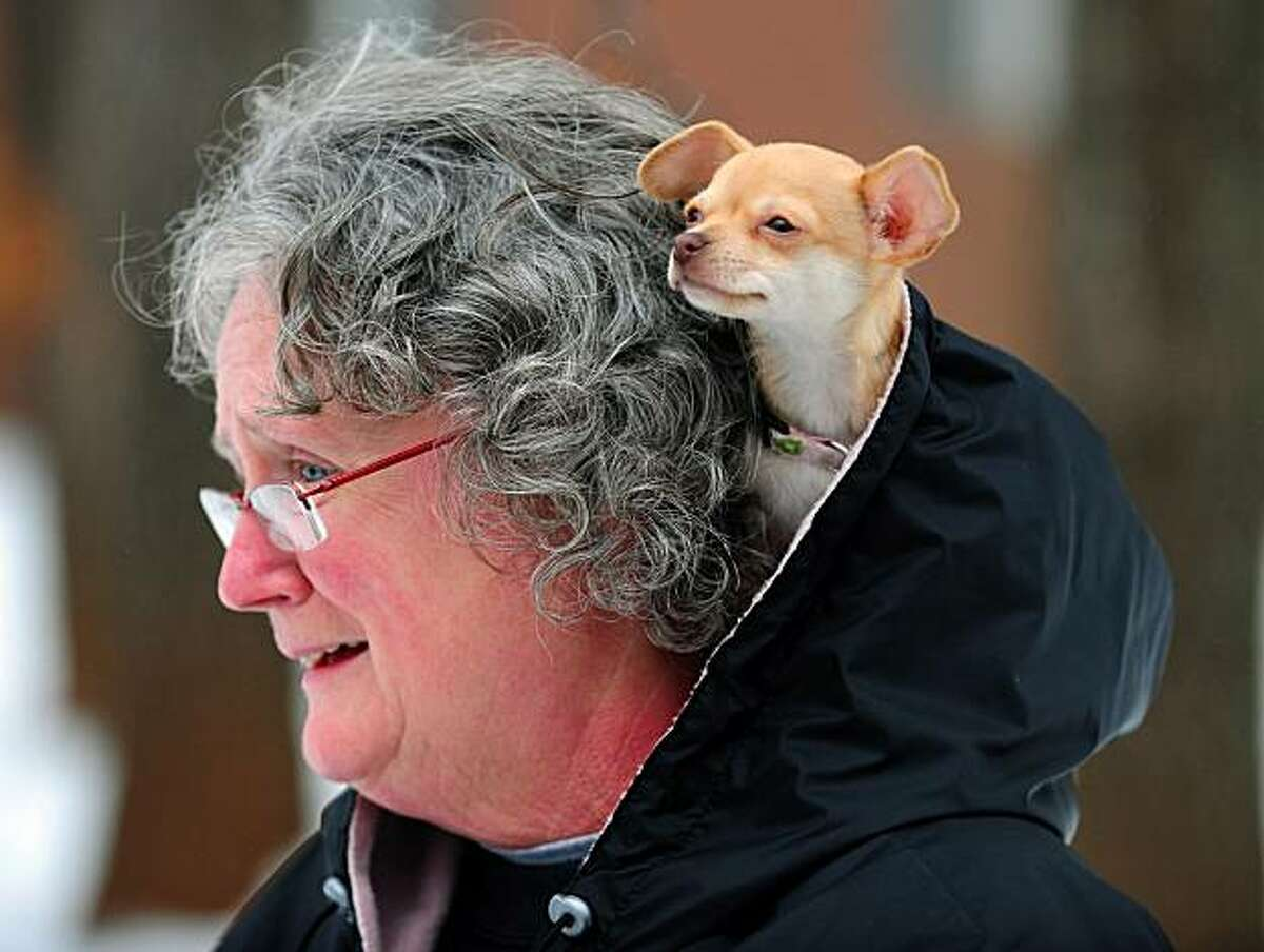 Jezzabelle, a 10 week old Chihuahua puppy keeps warm in the hood of Kathy Wiltshire as she enjoys a walk with her daughter and grandson Tuesday, Jan. 11. 2011 in Indian Trail, N. C. Freezing drizzle fell over North Carolina's population centers from Charlotte and Winston-Salem east to Raleigh, which had up to a quarter-inch of precipitation Tuesday. (AP Photo/The Charlotte Observer, Jeff Siner)