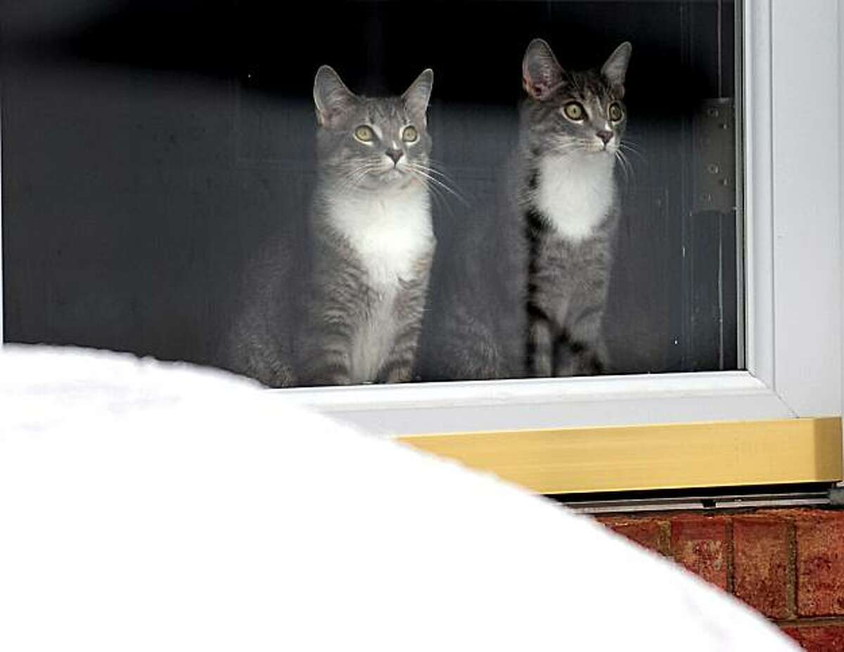 Two cats look out a window in Lake Park, N.C. on Tuesday, Jan. 11, 2011. Freezing drizzle fell over North Carolina's population centers from Charlotte and Winston-Salem east to Raleigh, which had up to a quarter-inch of precipitation Tuesday.