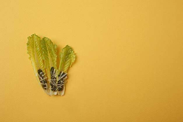 Hearts of Romaine Tipped with Anchoiade in San Francisco, Calif., on December 3, 2009. Food styled by Kalena Ross and Sarah Fritsche. Photo: Craig Lee, Special To The Chronicle