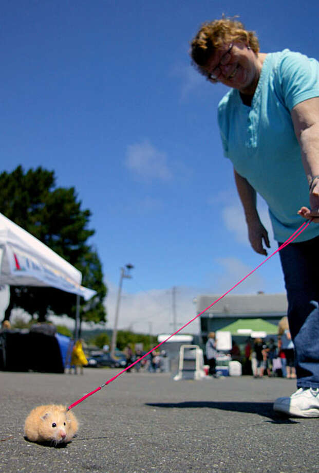 Clara Diffen, of Rio Dell, California, walks Igor, a female hamster during the annual Wildwood Days festival in Rio Dell on Sunday, Aug. 8, 2010. Photo: Josh Jackson, The Times-Standard