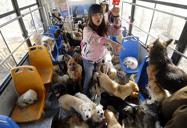 Can Dogs Travel On Buses