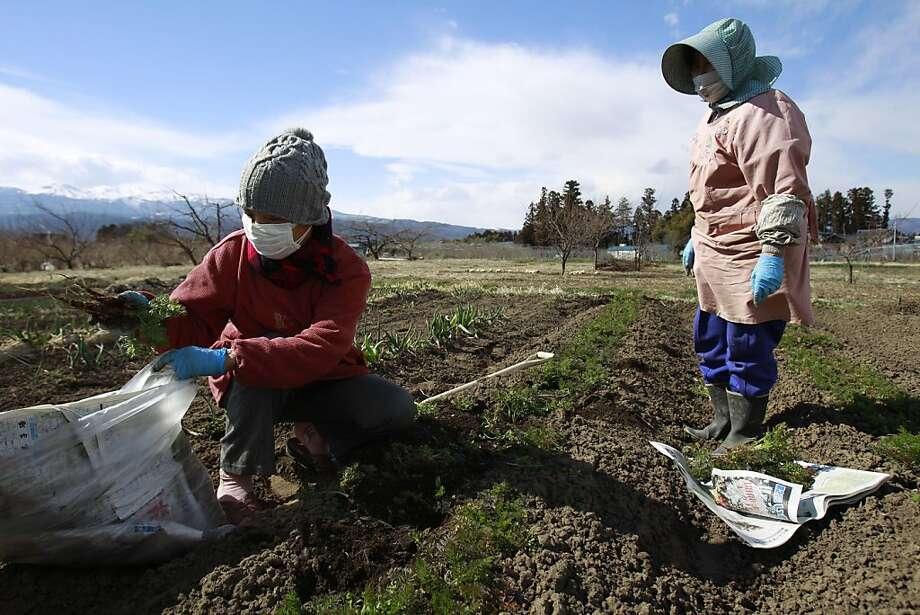 In this March 24, 2011 file photo, farmer Sumiko Matsuno, left, and her friend bag carrots on her farm to eat as she fears no one will buy them with the current radiation fallout in Fukushima, Fukushima prefecture, Japan.  The March 11 earthquake and tsunami caused massive death and destruction across northeastern Japan. But those who live near the crippled Fukushima Dai-ichi nuclear plant face a burden atop the losses they've already suffered: a fear of radiation that experts say could prove more unhealthy in the long run than the still-low levels of leaked radiation itself. Photo: Wally Santana, Associated Press