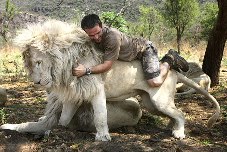 "In this photo taken Monday Oct. 11, 2010, Kevin Richardson, a.k.a. the Lion Whisperer piggybacks on the back of a lion in their enclosure at the Kingdom of the White Lion park in Broederstroom, near Johannesburg South Africa. A new film opening in the United States on Friday about a rare white lion who escapes becoming a trophy on a wall is a rare happy ending in a country where more than 1,000 lions are killed legally each year.Kevin Richardson, the man behind the movie, calls himself an ""ambassador of lions"" and hopes the film will act as one too at a time when foreign tourists are willing to pay up to $40,000 to shoot a big cat. Photo: Denis Farrell, AP"