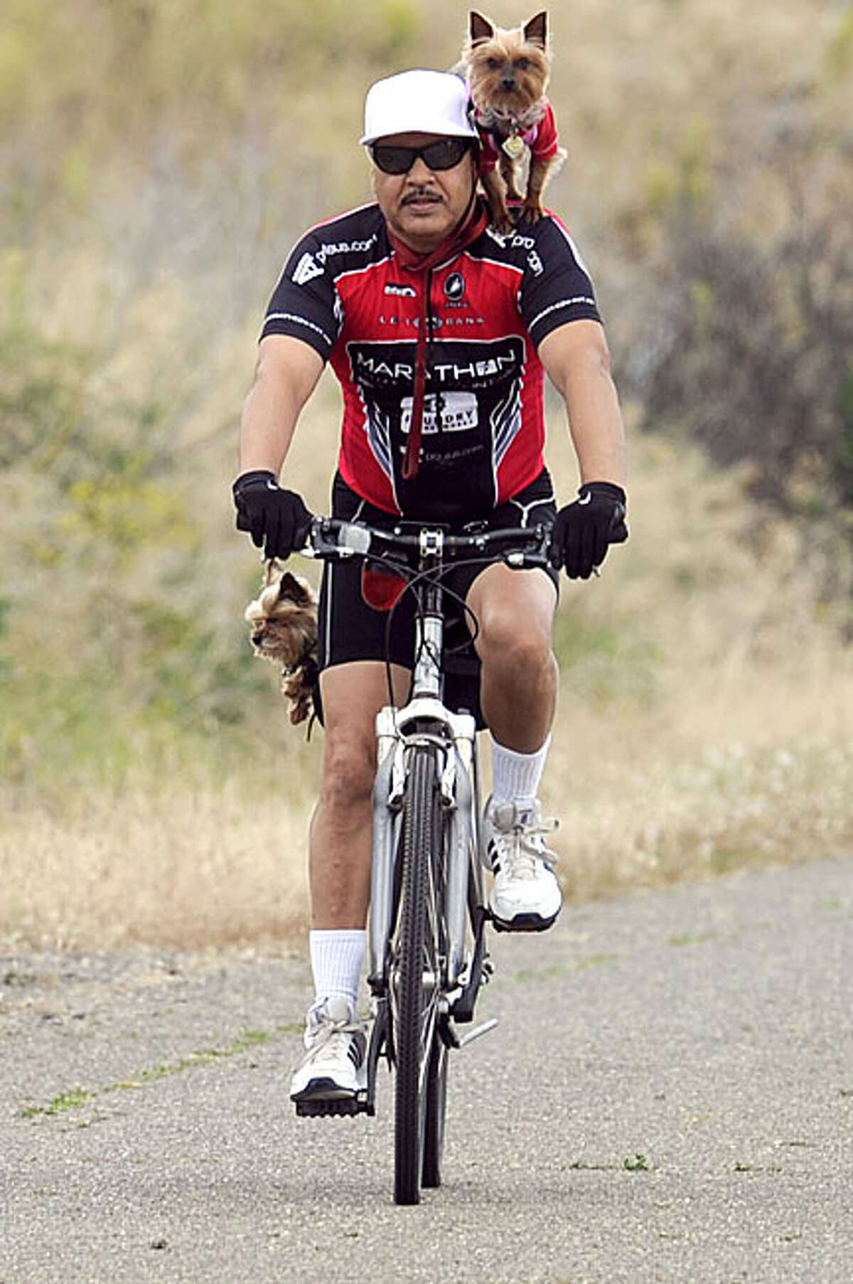 Joel Camacho of Fairfield, California has two four-legged passengers along for his bike ride on Nelson Rd. between Vacaville and Fairfield on Thursday, June 10, 2010. Camacho said that he used to ride with
