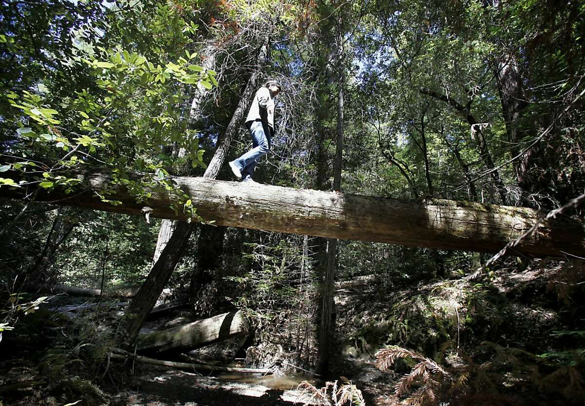 Regan Ranoa of the Save the Redwoods League walks across a fallen log above the Noyo River inside the purchased acerage. Save the Redwoods League has a 428 acre property high in the Noyo River watershed of Mendocino County to purchase from the Willits Redwood Company.