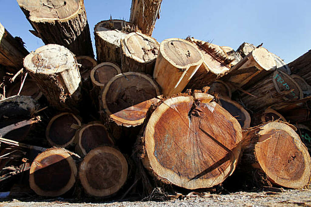 Redwood Logs Wait To Be Cut At The Willits Calif Company September