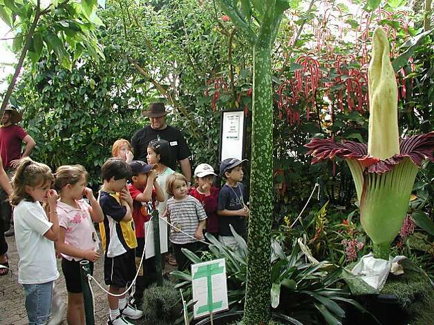 Uc Botanical Garden At Berkeley Fun With Plants Sfgate