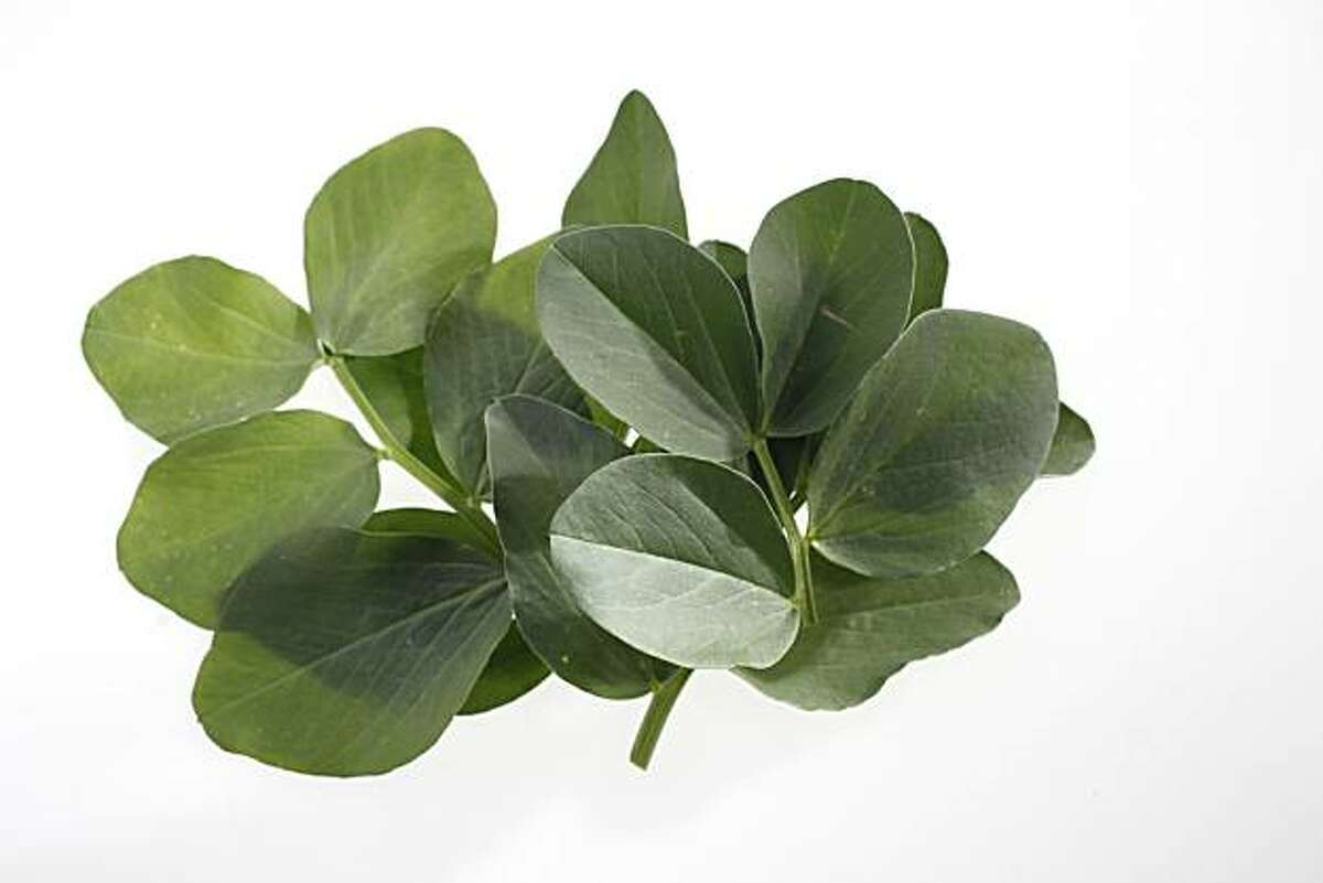 Fava leaves as seen in San Francisco, California, on March 16, 2011.
