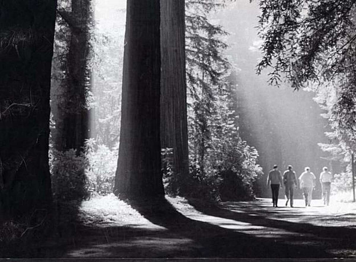 UPI JULY 11, 1986. TOWERING REDWOODS OF THE BOHEMIAN GROVE IN SONOMA COUNTY PROVIDE A PLEASANT SETTING FOR THE ANNUAL 2 WEEK ENCAMPMENT OF POLITICIANS, STATESMEN, BUSINESSMEN AND PROFESSIONALS WHO GATHER ON THE GROVE'S 2700 ACRES, 75 MILES NORTH OF SAN FRANCISCO. THE IDYLLIC SURROUNDINGS ARE WHERE THE BOHEMIAN CLUB'S AMERICAN MALE NOBILITY DON THEIR GRUBBIES AND ACT LIKE SCHOOLERS.