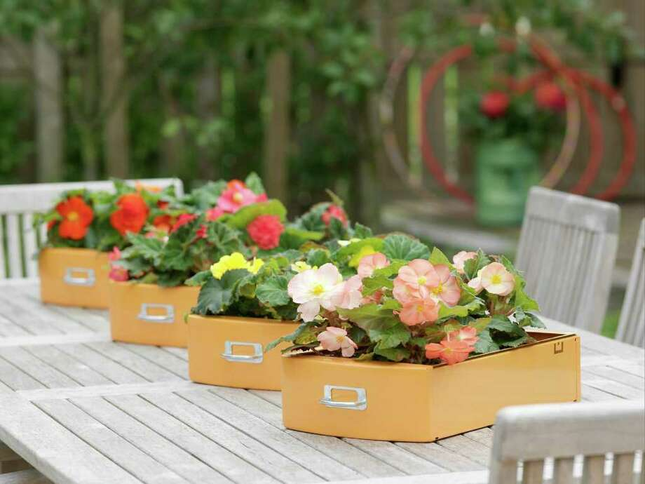 McCLATCHY OPTION: Begonia bulbs placed in file drawers, an alternative to a regular flowerpot. Photo: McClatchy / Newport News Daily Press